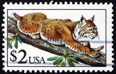 Postage stamp USA 1990 Bobcat, Lynx Rufus - stock photo