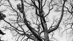 Lumberjack chopping down a tree. Part 1 Stock Footage
