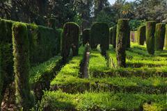 Maze at Real Alcazar Gardens in Seville Spain - stock photo
