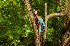 parrot in the park ,island of mucura,colombia - stock photo