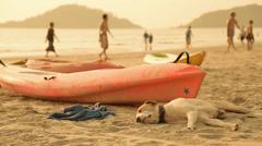 Cute sleeping dog on a beach Stock Footage