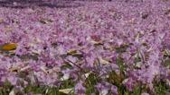 Stock Video Footage of blanket of flowers