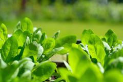 Home made organic veggies Stock Photos
