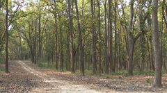 P03540 Trail and Forest at Kanha National Park Stock Footage