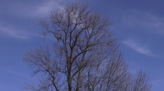 Leafless Trees, Early Spring, Winter, Late Fall or Autumn Stock Footage