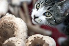 feline with mushrooms - stock photo