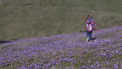 4K Child, Kid Playing, Walking Crocus, Violets Flowers, Meadow, Little Girl - stock footage