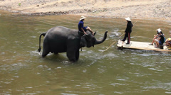 elephants eject water to Tourists - stock footage
