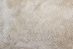 Wool sheep closeup Stock Photos