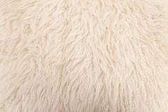 wool sheep closeup - stock photo