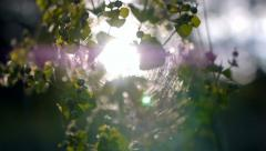 Sunbeam shining through the trees - stock footage