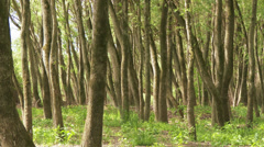 Stock Video Footage of Continental Forest 2