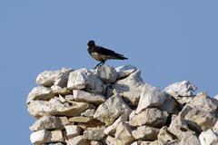 Black bird watching area around them - stock photo