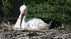 European White Stork on her Nest 8 Stock Footage