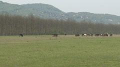 Stock Video Footage of Horses on Farm 2