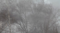 Stock Video Footage of Strong wind shakes the trees. It's snowing.