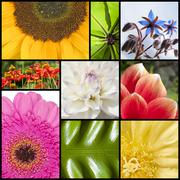 Collage of flowers in rectangles Stock Photos