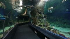 Sochi Discovery World Aquarium, the largest aquarium in Russia Stock Footage