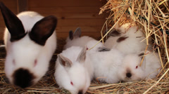 Rabbit family in rabbit - hutch Stock Footage
