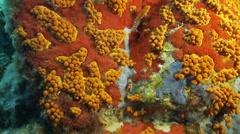 Underwater footage coral color corsica corse mediterranean Stock Footage