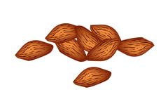 Stock Illustration of A Stack of Almonds on White Background