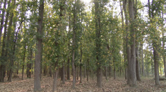 P03555 Kanha National Park Tiger Reserve in India Stock Footage