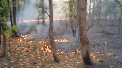 Erratic video of bizarre lines of fire in the leaf litter of a forest in India. Stock Footage