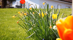 Spring flowers on the green grass Stock Footage