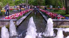Tulips in the park Keukenhof. - stock footage