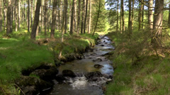 STREAM IN GALLOWAY FOREST PARK, SCOTLAND Stock Footage