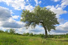 Alone tree on meadow Stock Photos
