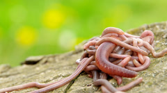 Earthworms collected from the soil - stock footage