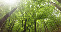 The sun shines through the young foliage of the trees in the mountain forest - stock footage