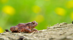 Toad frog on a wooden bark Stock Footage