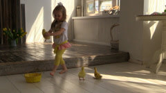 Little girl put in basket yellow ducklings on a background of bunny Stock Footage