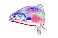 Trout swimming Stock Illustration