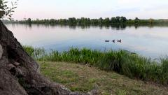 Three ducks swimming in a pond at sunset, in Mantova. Stock Footage