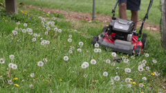 Time lapse mowing dandelions in yard Stock Footage