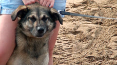 Dog wants to play on the sand .  Dog on a leash, she wants to play. Stock Footage