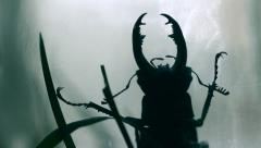 Creepy Bug In Jar Silhouette, Variable focus HD - stock footage