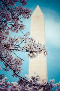 Stock Photo of washington dc cherry blossom with lake and washington monument.
