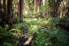 Redwood national park in california, usa Stock Photos