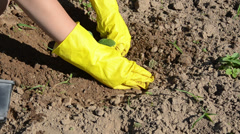 Woman with yellow gloves plant into wet pit cucumber seedling Stock Footage