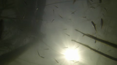 A flock of small fish Stock Footage