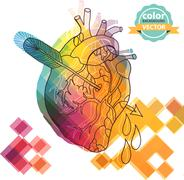 Anatomical color heart with arrow Stock Illustration