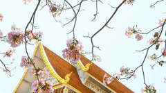 Flower with Thai architecture - stock footage