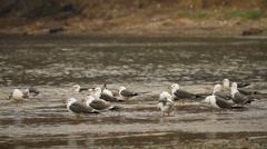 Seagulls Stock Footage
