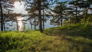 Stock Video Footage of Sunny Evening In The Forest
