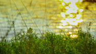 Stock Video Footage of Grass On A Background Of A Sunset Reflected In Water