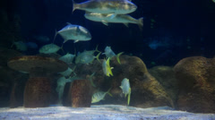 Fish swimming in an aquarium Stock Footage